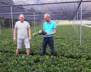 Bijvriendelijke biologische gewasbescherming in teelt van skimmia en magnoliaplantgoed